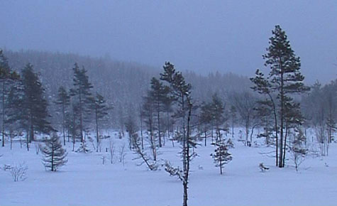 A snowy, desolate landscape with a forest in the background and a few scattered trees in the foreground